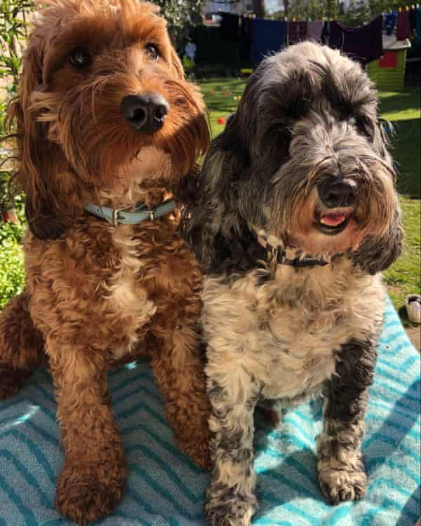 Justine Quirk's two dogs