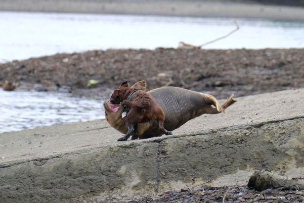 Photos show 'vicious' moment dog attacks seal in West London